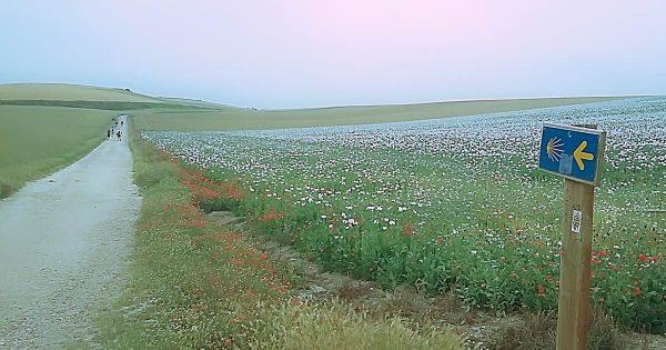 campo fiorito nel camino de Santiago